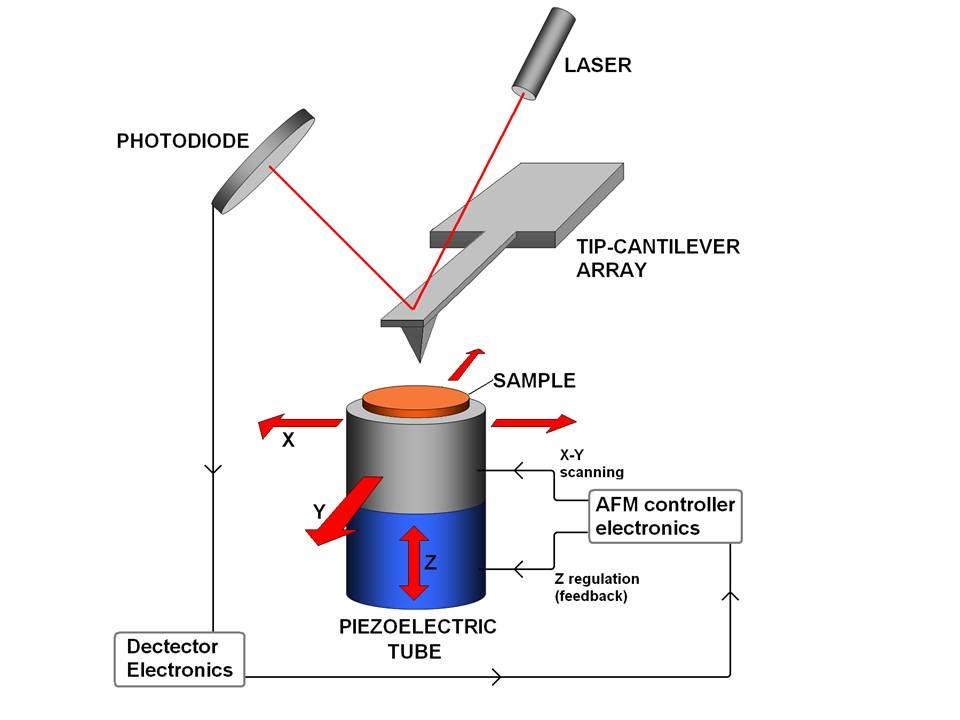 The Atomic Force Microscope senses the physical properties of a sample by passing a sharp probe on a cantilever over the sample and detecting deflections in the cantilever using reflections from a laser beam.