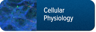 Cellular Physiology