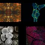Biosciences Images