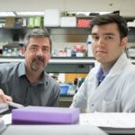 Leitinger Lab Discovery Reveals How Obesity Causes Disease and How We Can Stop It