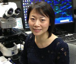 Yintang Shi, PhD _Bayliss Lab